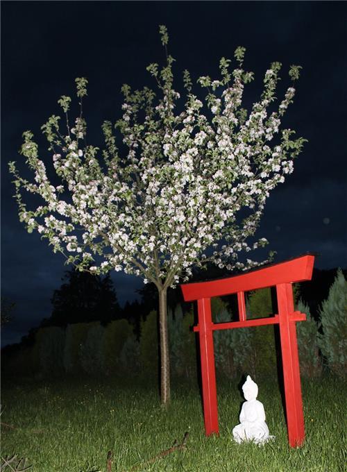 torii 04 japan garten holzbogen torbogen tor holz feng shui asien 175 x 180 cm ebay. Black Bedroom Furniture Sets. Home Design Ideas